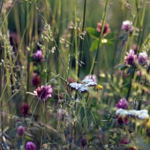 Natur, eng mange blomster