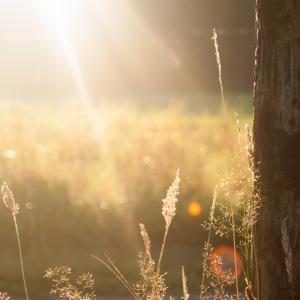 Natur, eng solopgang